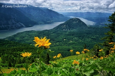 Dog Mountain Flowers