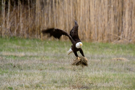 Eagle1-2048