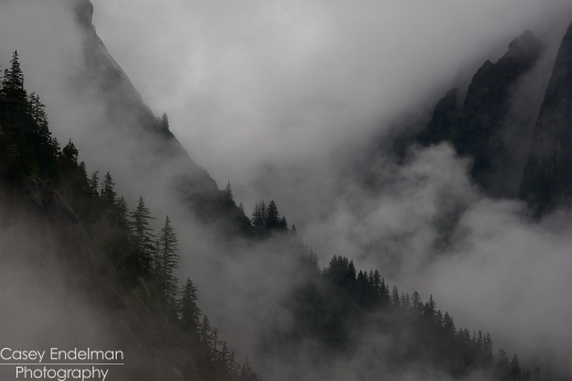 Tracy Arm Fjord Trees in the Fog